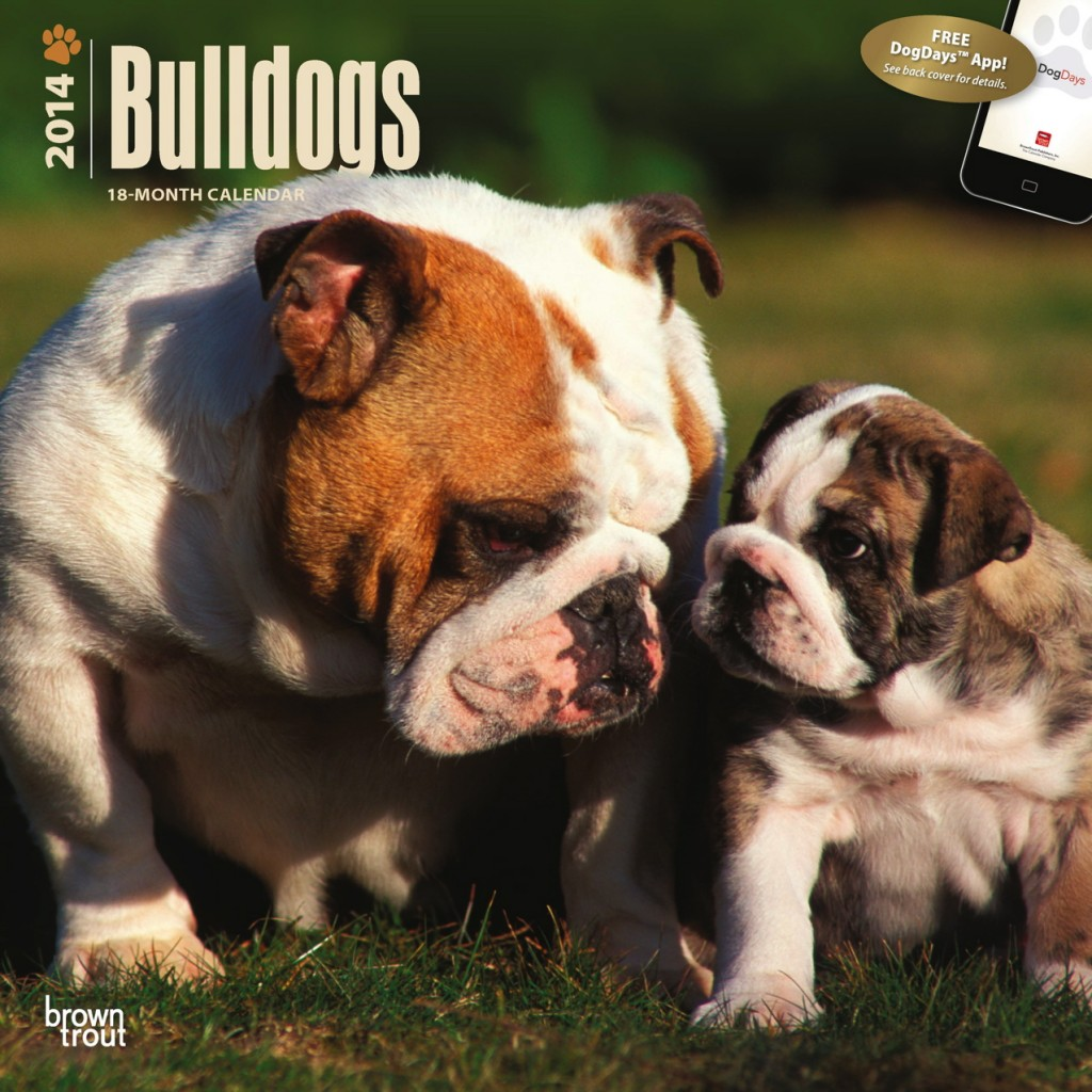 Bulldogs 2014 Square Wall Calendar with DogDays App