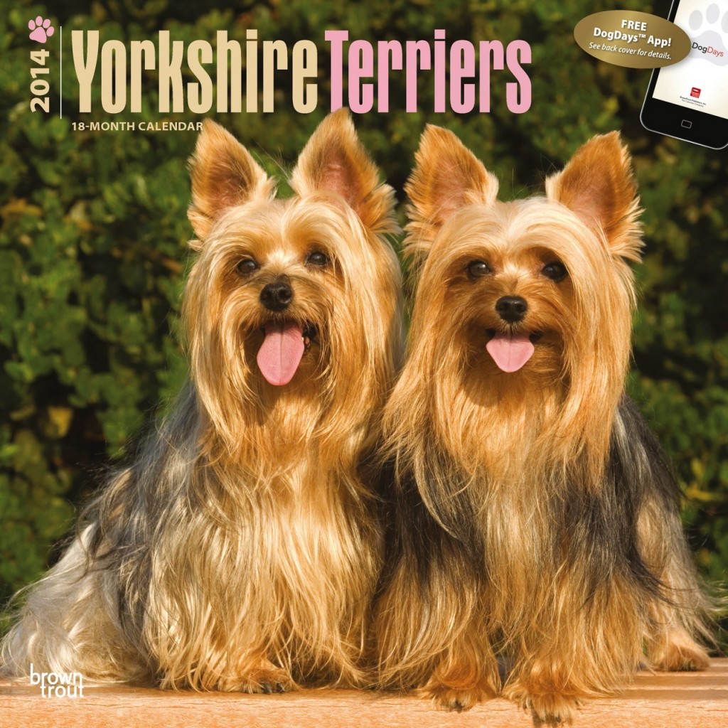 "Yorkshire Terriers 12"" x 12"" Square Wall Calendar"