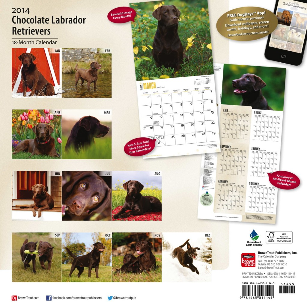 Chocolate Labrador Retrievers Square Calendar