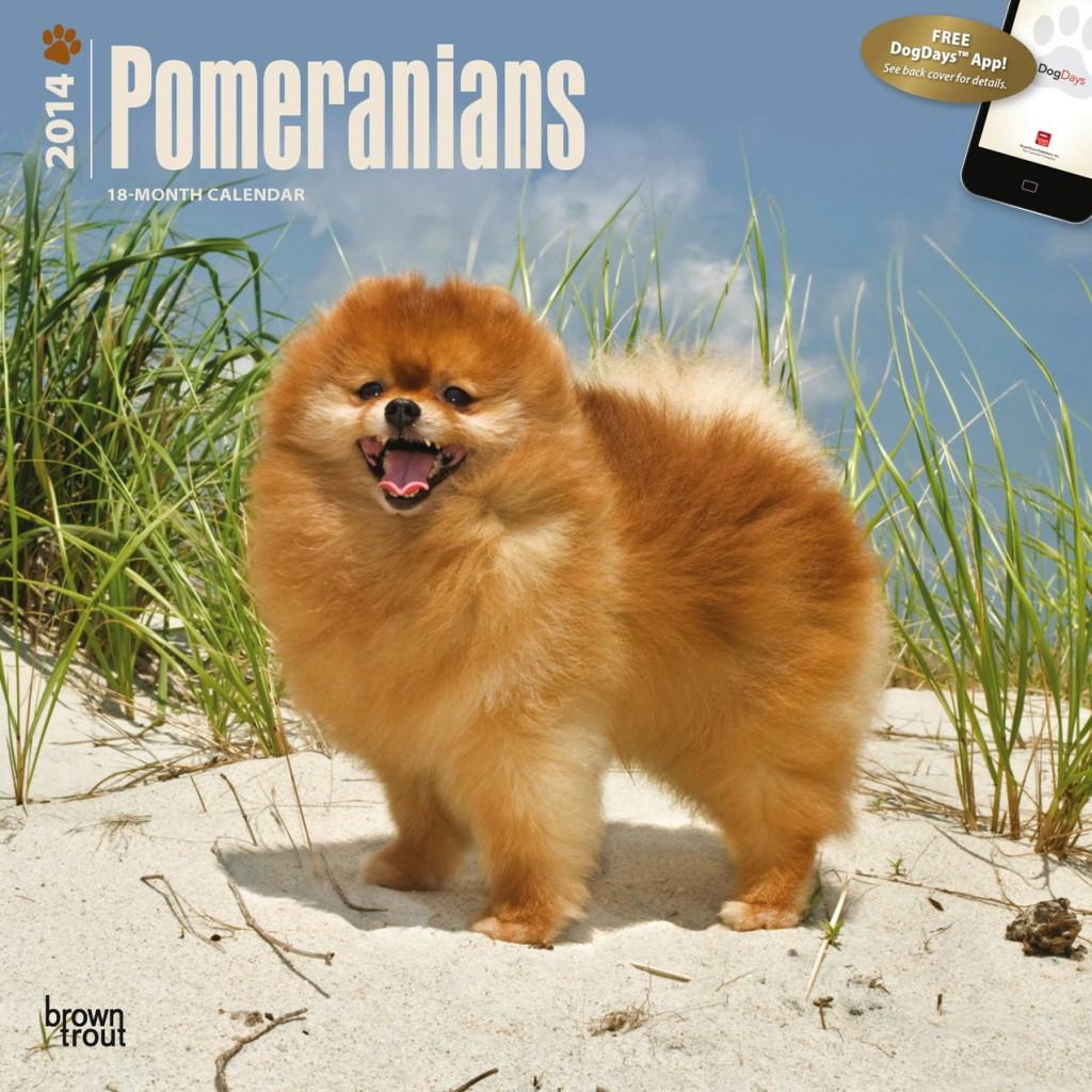 """Pomeranians 12"""" x 12"""" Square Wall Calendar"""