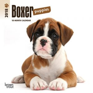 Boxer Puppies 2018 7 X 7 Inch Monthly Mini Wall Calendar
