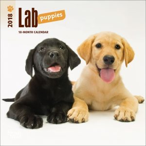 Lab Puppies 2018 7 X 7 Inch Monthly Mini Wall Calendar