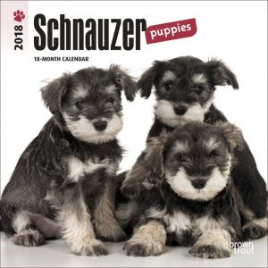 Schnauzer Puppies 2018 7 X 7 Inch Monthly Mini Wall Calendar