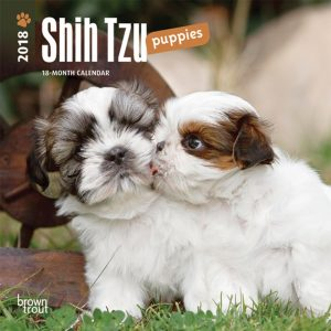 Shih Tzu Puppies 2018 7 X 7 Inch Monthly Mini Wall Calendar