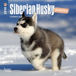 Siberian Husky Puppies 2018 7 X 7 Inch Monthly Mini Wall Calendar