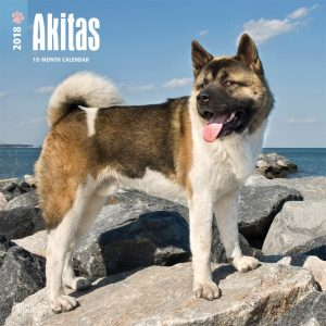 Akitas 2018 12 X 12 Inch Monthly Square Wall Calendar