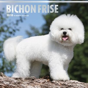 Bichon Frise 2018 12 X 12 Inch Monthly Square Wall Calendar With Foil Stamped Cover