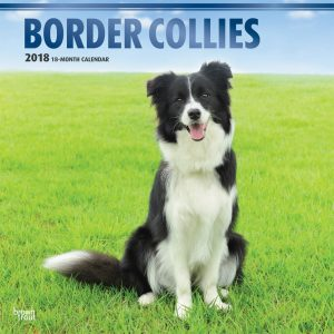 Border Collies 2018 12 X 12 Inch Monthly Square Wall Calendar With Foil Stamped Cover