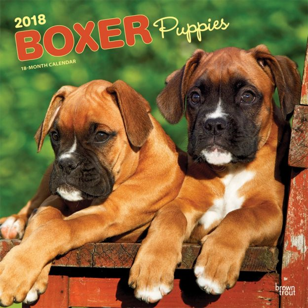 Boxer Puppies 2018 12 X 12 Inch Monthly Square Wall Calendar