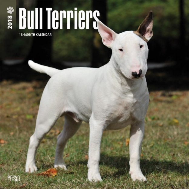 Bull Terriers 2018 12 X 12 Inch Monthly Square Wall Calendar