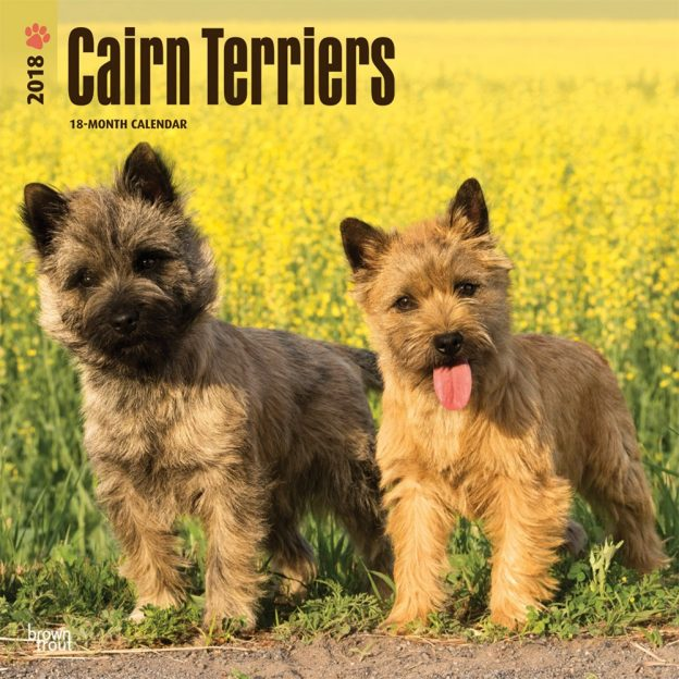 Cairn Terriers 2018 12 X 12 Inch Monthly Square Wall Calendar