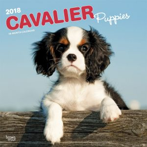 Cavalier King Charles Spaniel Puppies 2018 12 X 12 Inch Monthly Square Wall Calendar