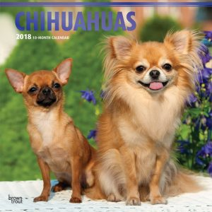Chihuahuas 2018 12 X 12 Inch Monthly Square Wall Calendar With Foil Stamped Cover