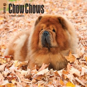 Chow Chows 2018 12 X 12 Inch Monthly Square Wall Calendar