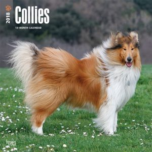 Collies 2018 12 X 12 Inch Monthly Square Wall Calendar