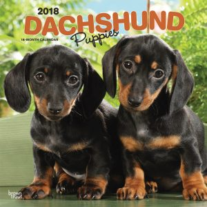 Dachshund Puppies 2018 12 X 12 Inch Monthly Square Wall Calendar