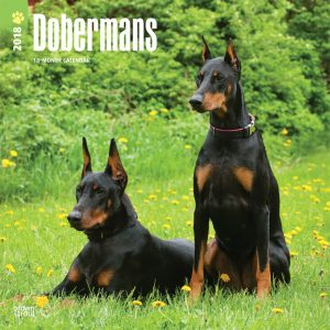 Dobermans 2018 12 X 12 Inch Monthly Square Wall Calendar
