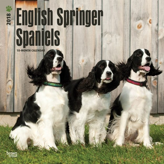 English Springer Spaniels 2018 12 X 12 Inch Monthly Square Wall Calendar
