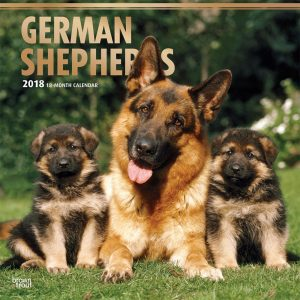 German Shepherds 2018 12 X 12 Inch Monthly Square Wall Calendar With Foil Stamped Cover