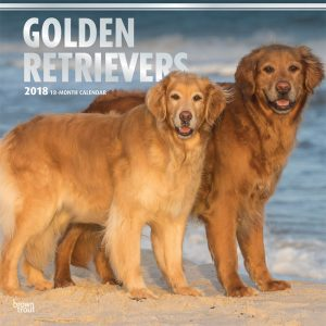 Golden Retrievers 2018 12 X 12 Inch Monthly Square Wall Calendar With Foil Stamped Cover