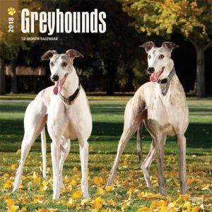 Greyhounds 2018 12 X 12 Inch Monthly Square Wall Calendar