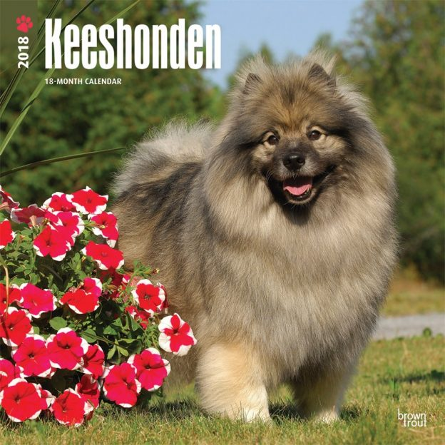 Keeshonden 2018 12 X 12 Inch Monthly Square Wall Calendar