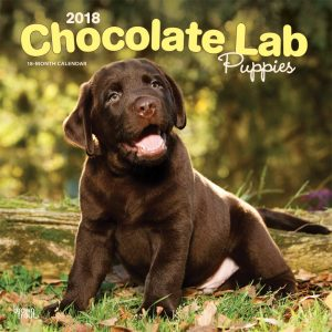 Chocolate Labrador Retriever Puppies 2018 12 X 12 Inch Monthly Square Wall Calendar