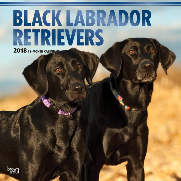 Black Labrador Retrievers 2018 12 X 12 Inch Monthly Square Wall Calendar With Foil Stamped Cover