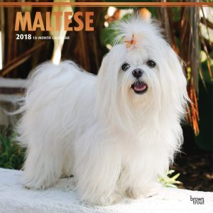 Maltese 2018 12 X 12 Inch Monthly Square Wall Calendar With Foil Stamped Cover