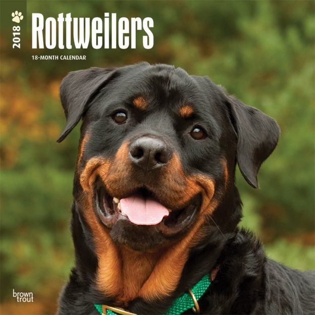 Rottweilers 2018 12 X 12 Inch Monthly Square Wall Calendar