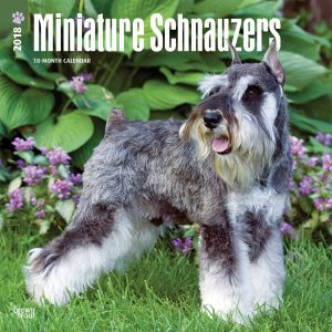 Miniature Schnauzers 2018 12 X 12 Inch Monthly Square Wall Calendar