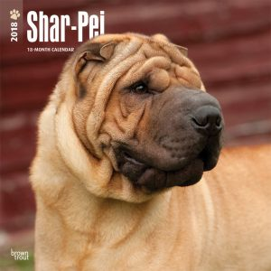 Shar Pei 2018 12 X 12 Inch Monthly Square Wall Calendar