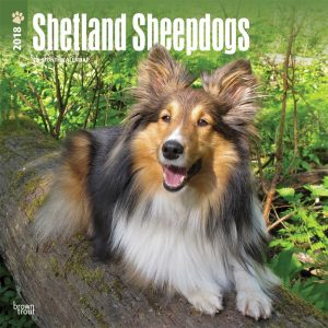 Shetland Sheepdogs 2018 12 X 12 Inch Monthly Square Wall Calendar