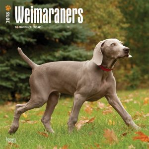 Weimaraners 2018 12 X 12 Inch Monthly Square Wall Calendar
