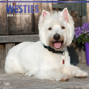 West Highland White Terriers 2018 12 X 12 Inch Monthly Square Wall Calendar With Foil Stamped Cover