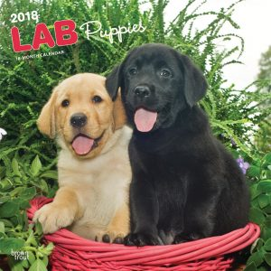 Labrador Retriever Puppies 2018 12 X 12 Inch Monthly Square Wall Calendar