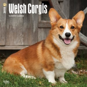 Welsh Corgis 2018 12 X 12 Inch Monthly Square Wall Calendar