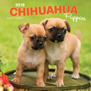 Chihuahua Puppies 2018 12 X 12 Inch Monthly Square Wall Calendar