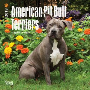American Pit Bull Terriers 2018 7 X 7 Inch Monthly Mini Wall Calendar