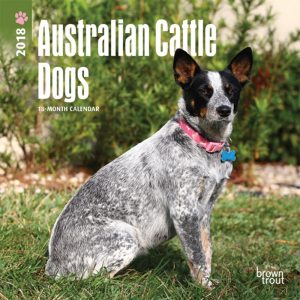 Australian Cattle Dogs 2018 7 X 7 Inch Monthly Mini Wall Calendar