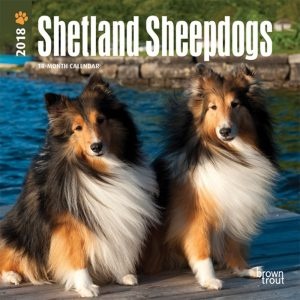 Shetland Sheepdogs 2018 7 X 7 Inch Monthly Mini Wall Calendar