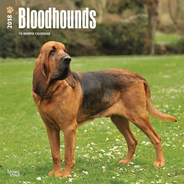 Bloodhounds 2018 12 X 12 Inch Monthly Square Wall Calendar