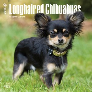 Longhaired Chihuahuas 2018 12 X 12 Inch Monthly Square Wall Calendar