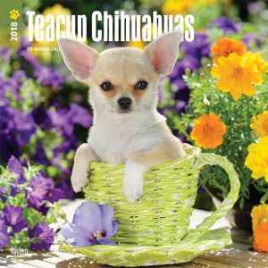 Teacup Chihuahuas 2018 12 X 12 Inch Monthly Square Wall Calendar