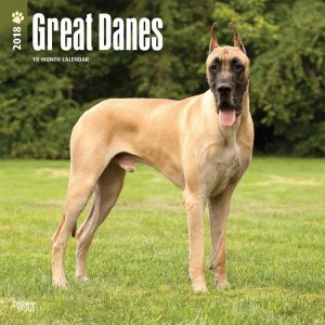 Great Danes 2018 12 X 12 Inch Monthly Square Wall Calendar