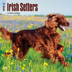 Irish Setters 2018 12 X 12 Inch Monthly Square Wall Calendar