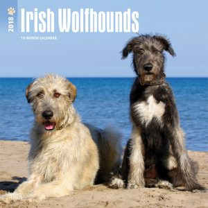 Irish Wolfhounds 2018 12 X 12 Inch Monthly Square Wall Calendar
