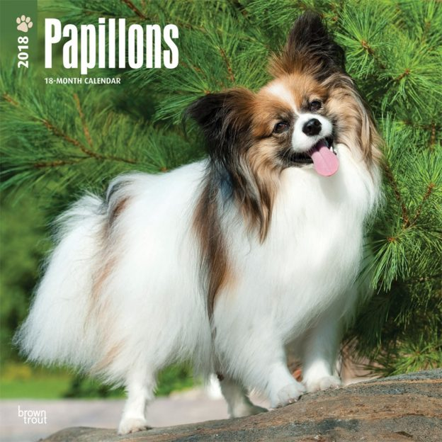 Papillons 2018 12 X 12 Inch Monthly Square Wall Calendar