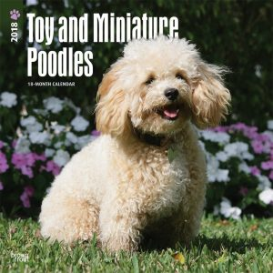 Toy And Miniature Poodles 2018 12 X 12 Inch Monthly Square Wall Calendar