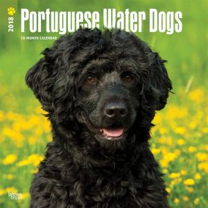 Portuguese Water Dogs 2018 12 X 12 Inch Monthly Square Wall Calendar